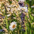 Целебные травы Горного Крыма - в наличии