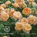 Розы  David Austin 2019