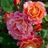 Роза Мишель Бедросьян