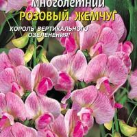 Горошек многолетний Розовый жемчуг