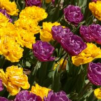 Коллекционная смесь Свит Тутти Фрутти 16  шт