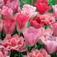 Коллекционная смесь Розовый туман 18 шт